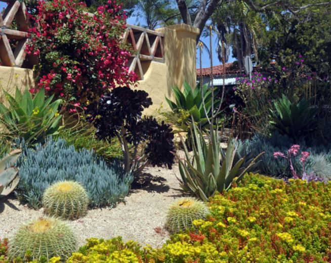 Xeriscaping Its True Meaning And Importance Sustainability